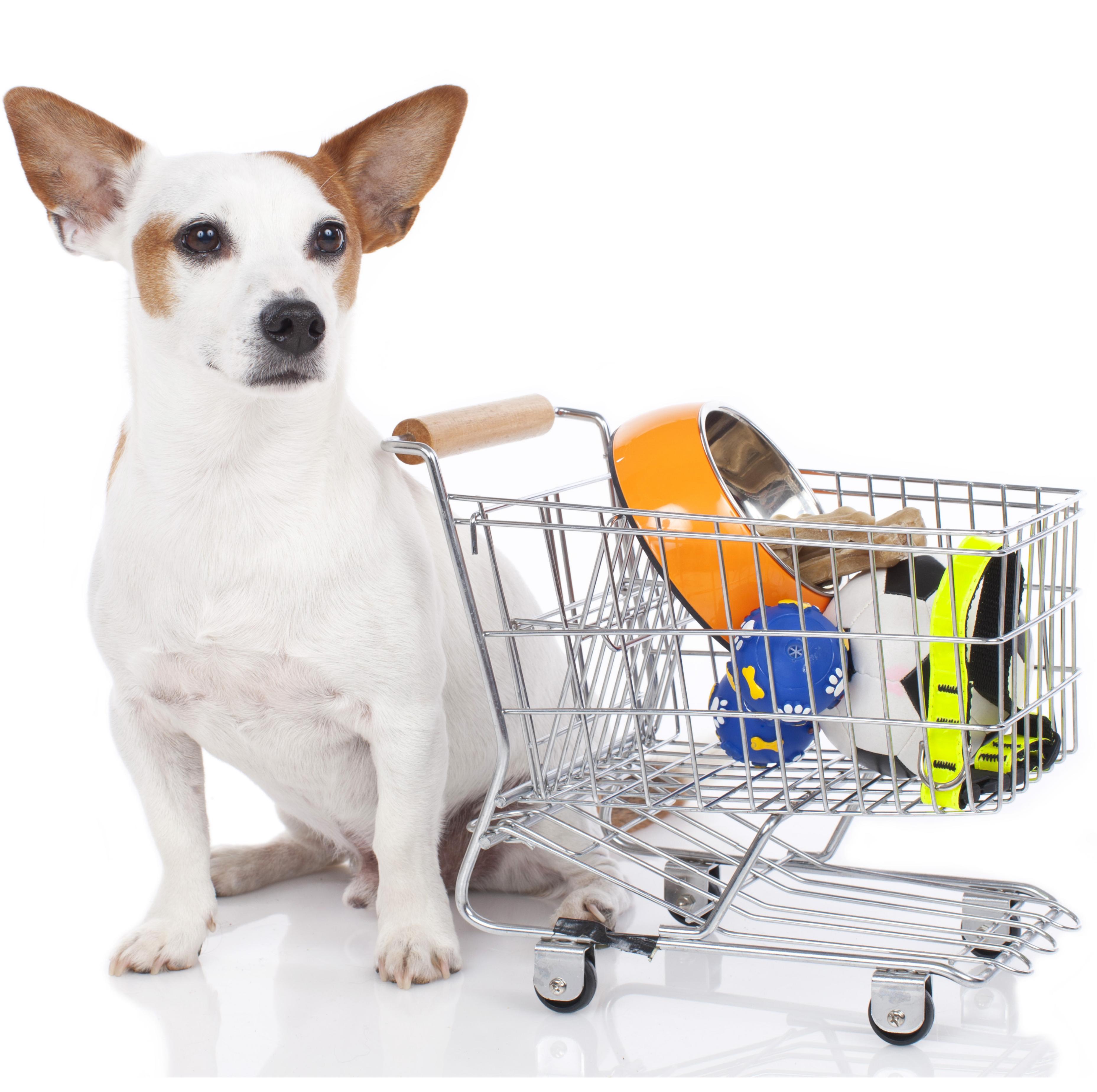 Dog Grooming Fairfax